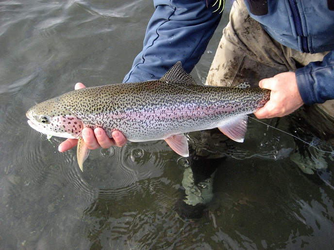 A typical Alaska West rainbow
