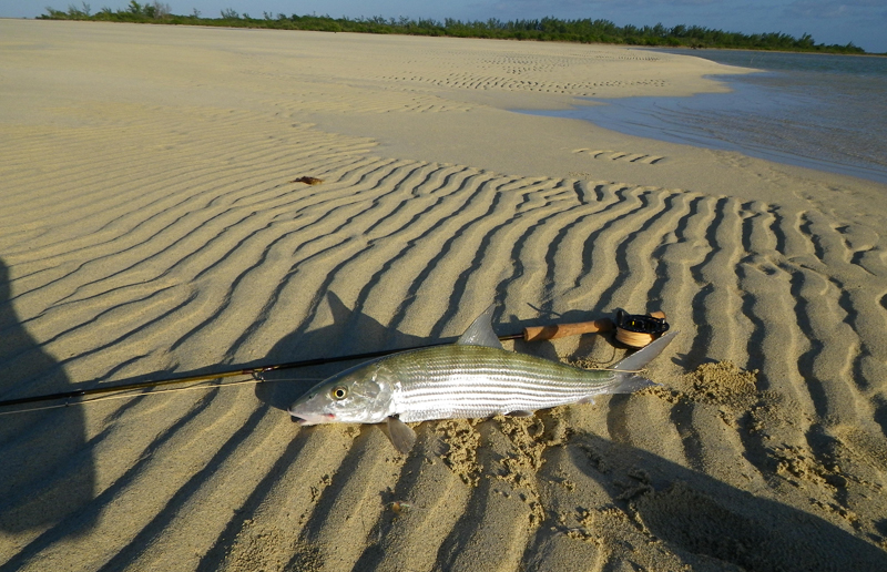 A big bonefish taken in the White Bight near Mount Pleasant Lodge
