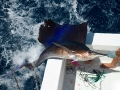 Sailfishing off the Yucatan Peninsula, Mexico