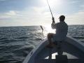 A tarpon takes flight off Tortuguero