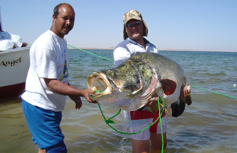 A huge catch courtesy of Egypt\'s Nile Perch Heaven