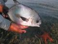 The ultimate Pescador prize: a permit
