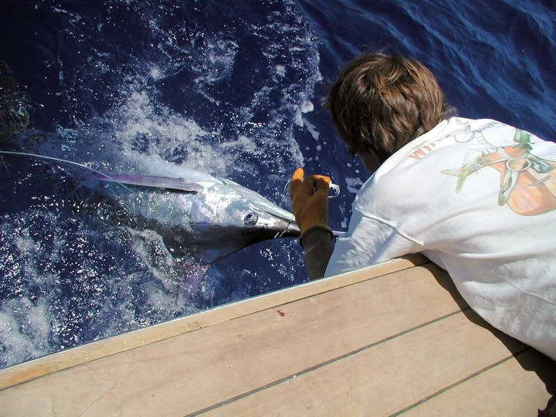 Marlin fishing, Bahamas