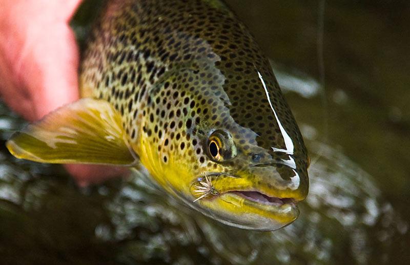 FishinGuide