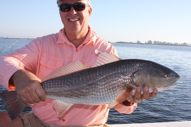 A typical Florida redfish