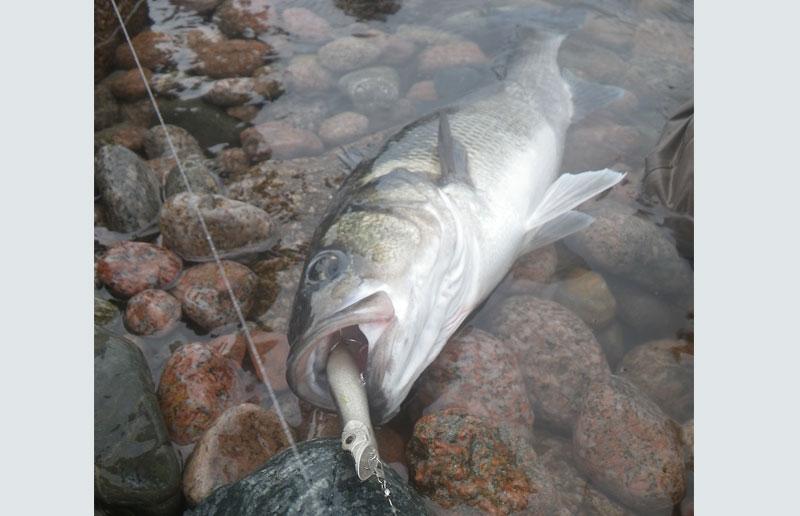 Bass fishing specialist
