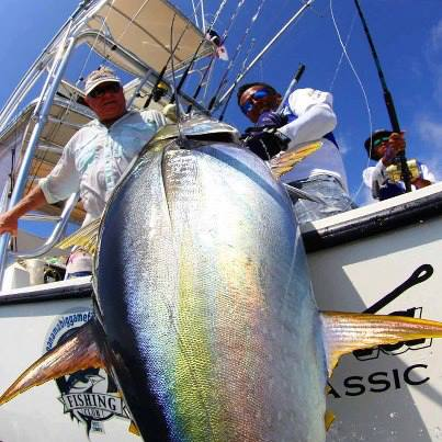 Panama big game fishing club panama fishing lodges hotels for Big game fishing