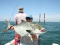 Leerfish (Salty Dog Game Fishing, Guinea-Bissau)