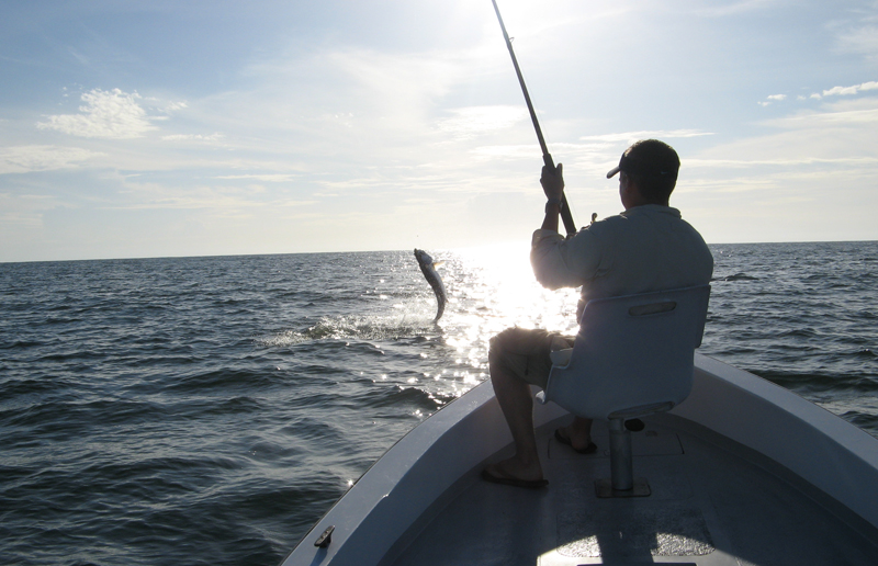 Tarpon on, Tortuguero Sport Fishing