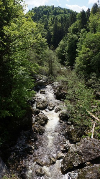 Cantal uncovered: wild trout in France's hidden hotspot