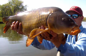 Fishipedia Top 5: Carp on the Fly Videos