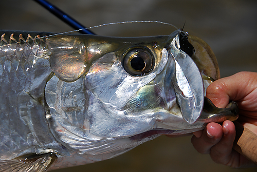 Ascension Bay Fishing Report with Captain Greg Rahe (Aug 2012)