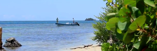 Video Goodness: 'Fly Fish Guanaja'