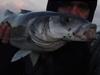 North Devon Bass Fishing Guide: Joel Soul