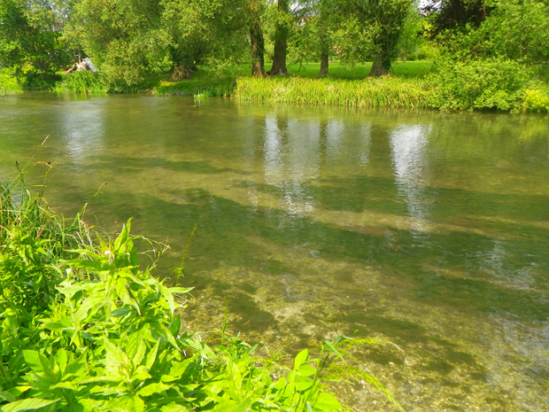 Mayfly Magic on the River Kennet