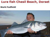 UK South Coast Bass Guide: Mark Padfield