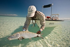 North Riding Point bonefish