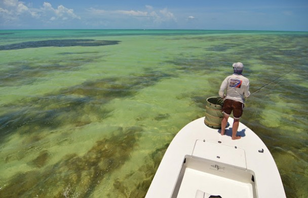 The View from West Florida with the Pine Island Angler: Key West Permit