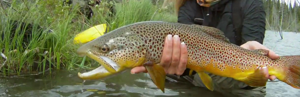 Video Goodness: Plan B Faceless Fly Fishing