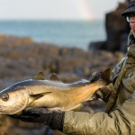 Skye Sport: Pollock on the Fly in the Scottish Islands