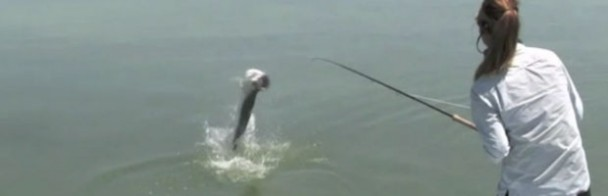 Fishipedia Top 5: 2012 Season Tarpon Videos
