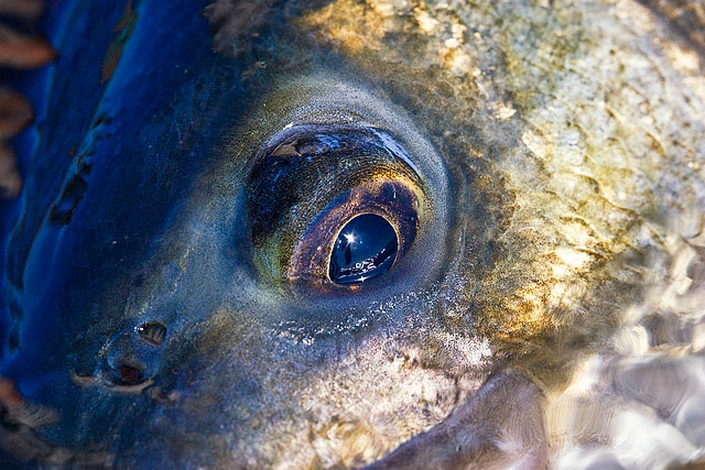Henry Gilbey's bass-eye view