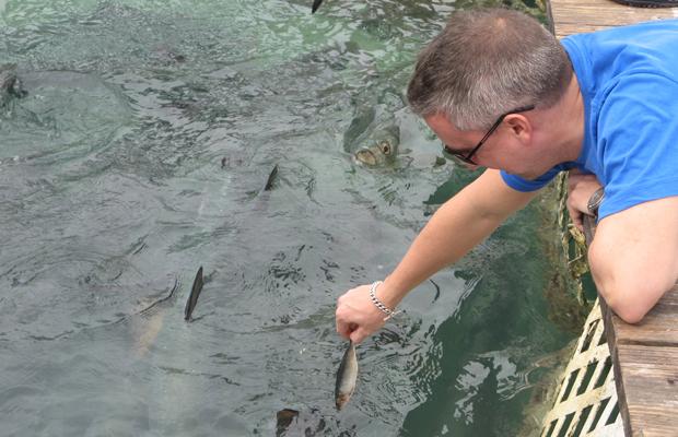 Feeding the tarpon at Robbie's Marina