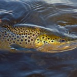 In Search of Highland Trout