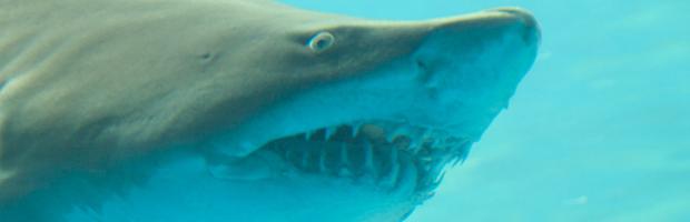 Shark-fishing videos