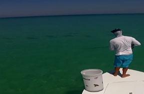 Fishipedia Top 5: 2012 Season Tarpon Videos