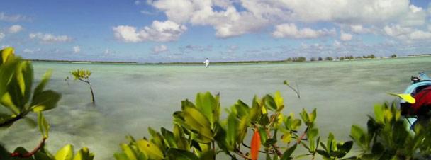 Video Goodness: 'Wading Turks'