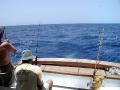 Deep-sea fishing, Bimini-style