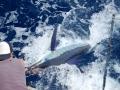 Deep-sea fishing specialist