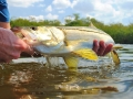 A Pine Island snook. Pic courtesy of Wildfly Charters