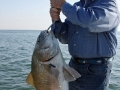 A huge black drum