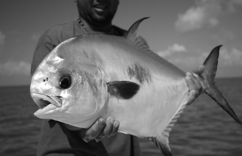 GoFish Belize - Permit