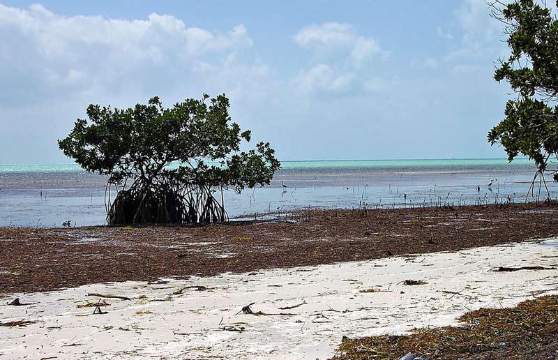 Long Key State Park: great option for DIY bonefishermen
