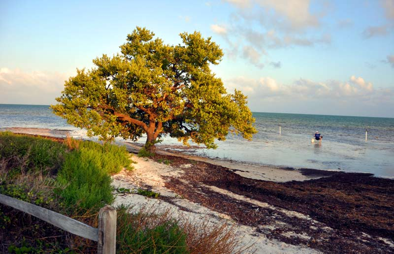 Long Key State Park (Pic: Angelica Vicente)