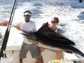 Sailfish: frequent visitors to Miami waters