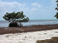 Long Key State Park: great option for DIY bonefishermen