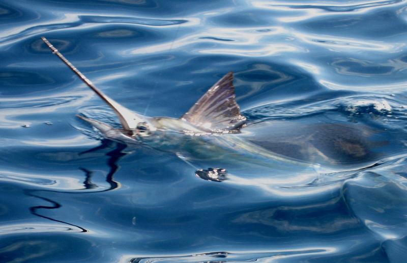 Old Hat Deep Sea Fishing Charters