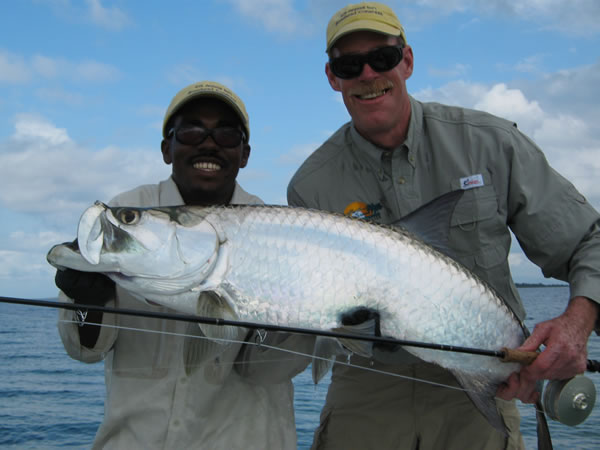 One of the many resident tarpon