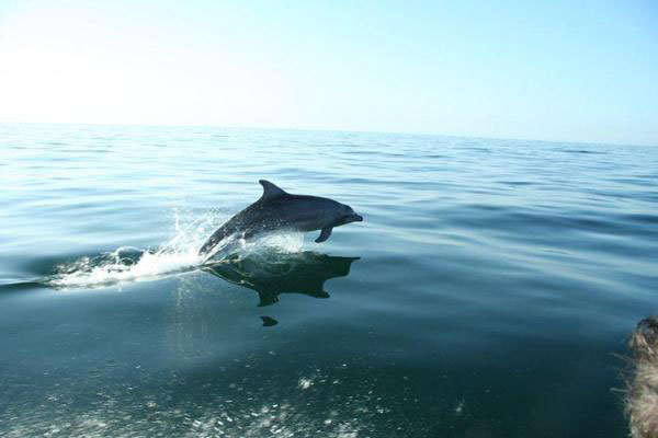 Dolphin (Salty Dog Game Fishing, Guinea-Bissau)