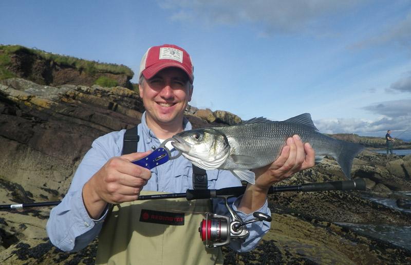 A typical Irish bass taken near Thatch Cottage Ireland